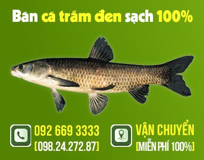 Các món ăn chế biến từ cá trắm đen rất bổ dưỡng và có tác dụng chữa bệnh